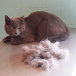 Entfernen der losen Haare