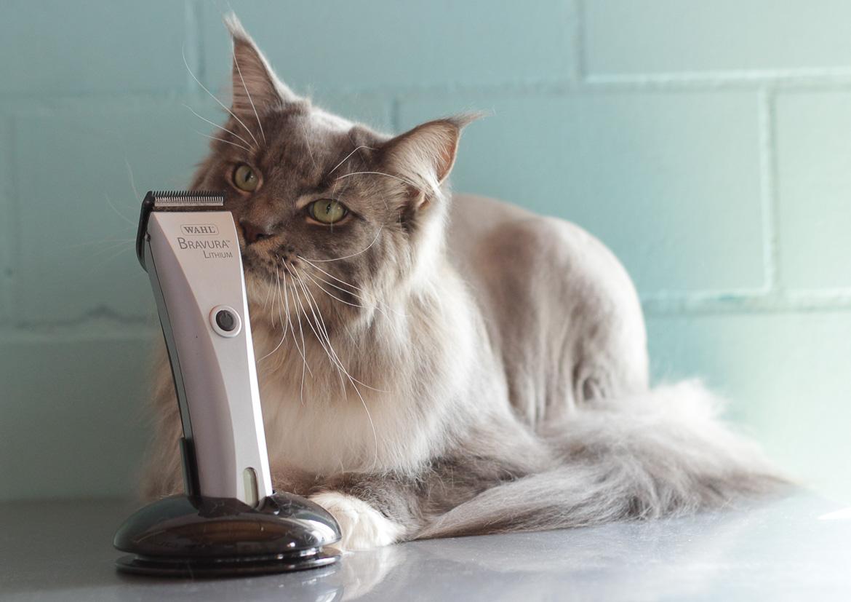 """Die """"Wahl"""" wenn es um Rasieren einer Katze geht"""