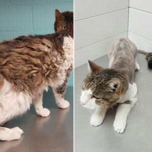katzenpflege, ältere Katze, fellpflege