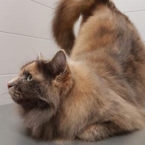 Entspannte Katze nach der Katzenpflege