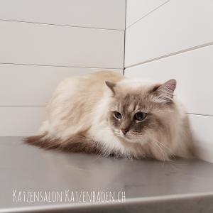 Katzenfotos2017 (62)-2